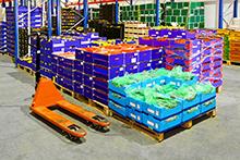 Fruits warehouse